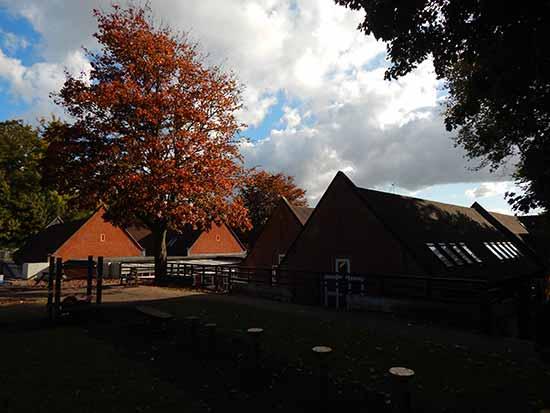 Berkswell Primary School Playground